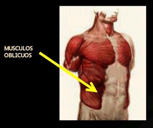 Cirugía Estética - Abdominoplastía